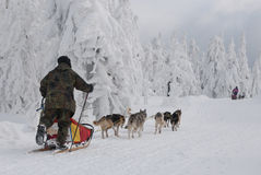 Dogsled on trail of Sedivacek's  long Stock Photo