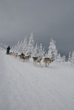 Dogsled on trail of Sedivacek's long Royalty Free Stock Photo