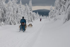 Dogsled on trail of Sedivacek's long Royalty Free Stock Photos