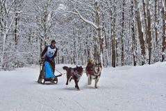 Dogsled - uitstekende vrachtwagens noordelijke Inheems nu wordt spo Royalty-vrije Stock Foto