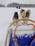 Dogsled in a winter landscape Stock Photography