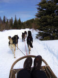 Dogsledding Photographie stock libre de droits