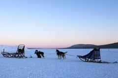 Dogsledding au crépuscule Image libre de droits