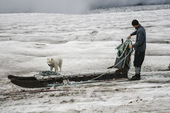 Dogsledding on glacier Stock Photo