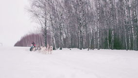 Dogsledding handler with his team of trained husky dogs.  stock video