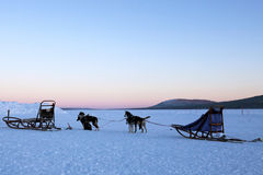 Dogsledding no crepúsculo Imagem de Stock Royalty Free