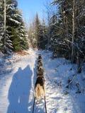 Dogsledding y sombras humanas - Quebec Imágenes de archivo libres de regalías