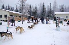 dogsleding的阿拉斯加 免版税库存照片