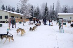 Dogsleding in Alaska Royalty Free Stock Photo