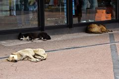 Homeless dogs Stock Image