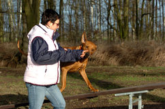 Dogsport Stock Photography