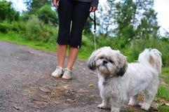 Dogwalking on grey day royalty free stock photo