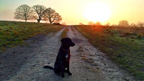 Dogwalking in the park. Richmond Park in London, UK in 2013 Stock Image
