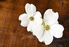 Dogwood On Antique Wood Background Royalty Free Stock Photo