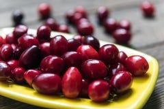 Free Dogwood Berries Royalty Free Stock Image - 78487986