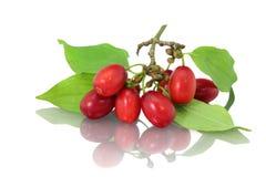 Dogwood berries. On white background Royalty Free Stock Photo