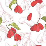 Dogwood berry graphic color seamless pattern sketch illustration Stock Images