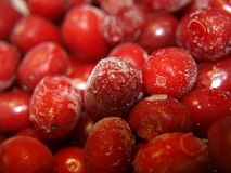 Dogwood berry. Dogwood - it's incredible healing berry bright red color, are preparing jams, jellies, liqueur, marmalade, jam, fruit compote, and a lot of Royalty Free Stock Image