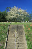 Dogwood in bloom at top of stairs, Cemetery, NC state line Stock Photo