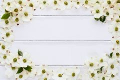 Dogwood Blossom Background Stock Photo