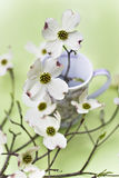 Dogwood blossoms. In a delicate tea cup Stock Photography