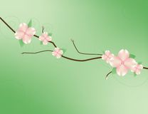 Dogwood Branch. Illustration of a dogwood branch in bloom Royalty Free Stock Image