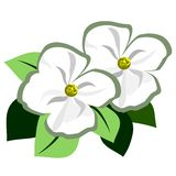 Dogwood Flower Accent. Dogwood like white flowers with green leaves in back for an illustrative accent stock illustration