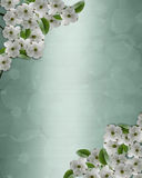 Dogwood flowers background Royalty Free Stock Photography