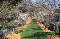 Dogwood Lane Spring VA State Arboretum Stock Image