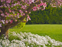Dogwood Tree Landscape Royalty Free Stock Photos