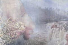 Dogwoods από τις πτώσεις 2 Στοκ εικόνα με δικαίωμα ελεύθερης χρήσης