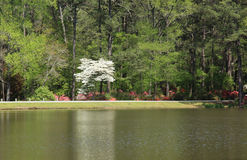 Dogwoods and Azaleas at Callaway Gardens Stock Photo