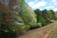Dogwoods at Callaway Gardens Stock Photography