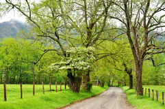 Dogwoods, fog, and new tree growth. Stock Photos
