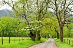 Dogwoods, névoa, e crescimento novo da árvore. Fotos de Stock