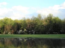 Dogwoods in the Spring reflecting on lake. Dogwoods in the Spring reflecting on a lake on a farm in Indiana Stock Photo