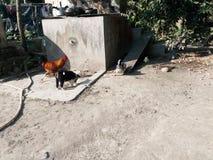 Dogy com pintainho fotografia de stock