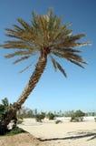 Doha, Qatar Royalty-vrije Stock Foto