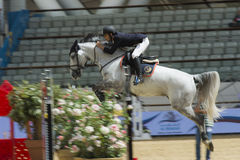 Action from the  CHI Al Shaqab 2013 Royalty Free Stock Photos
