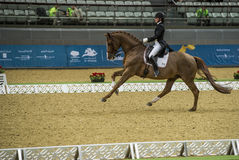 Action from the  CHI Al Shaqab 2013 Stock Image