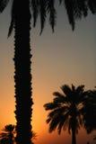 doha solnedgång Royaltyfri Bild