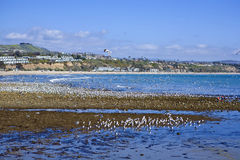 Doheny Extreme Low Tide Stock Image