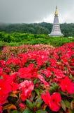 Doi Intanon National Park (Thailand) Royalty Free Stock Image