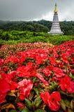 Doi Intanon National Park (Thailand) Royalty Free Stock Photo