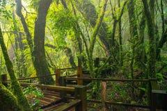Doi Inthanon Forest Park de Chiangmai, Tailândia fotografia de stock
