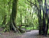 Doi Inthanon National Park Royalty Free Stock Photography