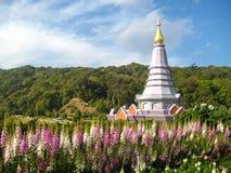 Doi Inthanon pagod, som är flera hundra meter ovannämnd havsnivå Royaltyfria Bilder