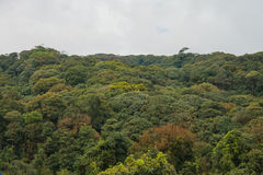 Doi inthanon rain forest in Chiang mai, Thailand Royalty Free Stock Photos