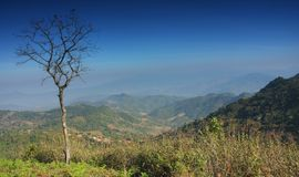 Doi kad phee. Mountain and tree in doi kad phee (thailand stock image