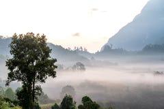 Doi Luang Chiang Dao, Chiang Mai Thailand Nov 2015 Arkivbilder